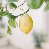 Lime Mint - edícia citrusových vôní sviežej limetky v kombinácii s ľadovou mätou vytvára osviežujúci ovocný koktejl 🍋.  #lemon #lime #mint #scent #parfume #fragrance